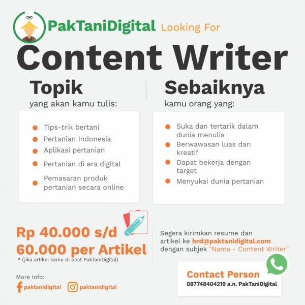 lowongan menjadi content writer