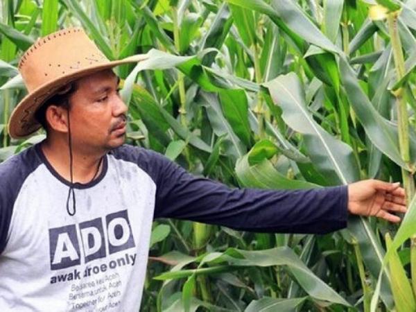 regenerasi petani muda