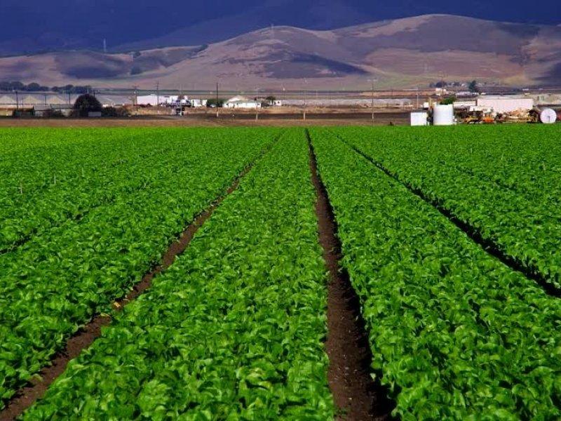 pentingnya pertanian terpadu