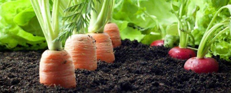 cara memilih sayur sehat