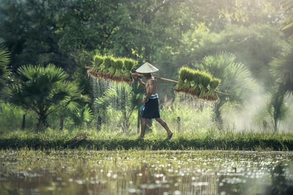 Kemakmuran Bangsa Ada di Tangan Petani
