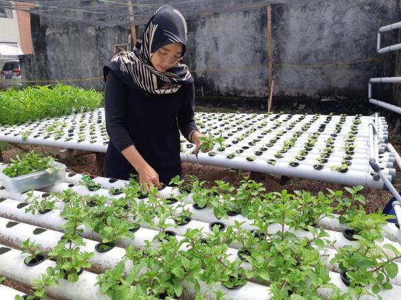 Gita Yuliarti AP, Mahasiswa Pascasarjana yang Menekuni Hidroponik