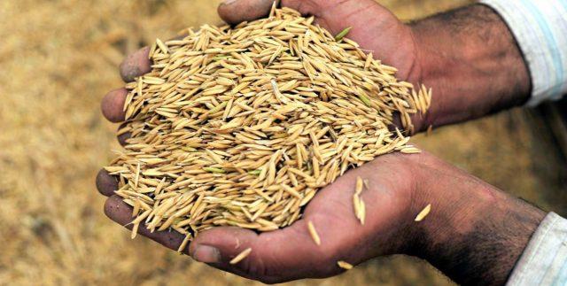 4 produk yang bisa dihasilkan dari sekam padi