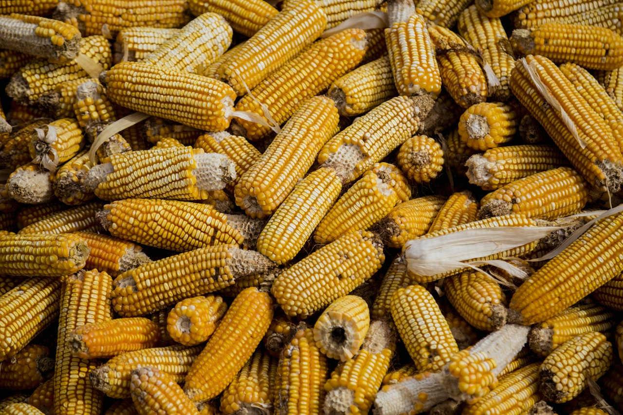 Komoditas Pertanian yang Laris di Pasar Internasional