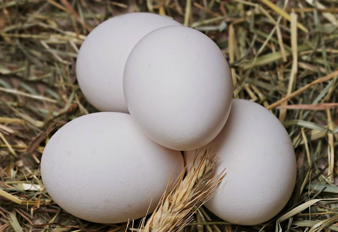 Cara Membuat Alat Penetas Telur Ayam yang Sederhana