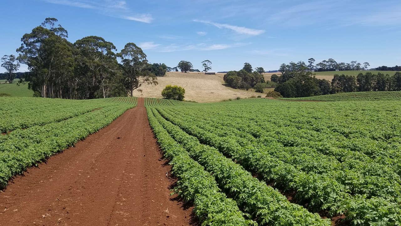 Lahan Pertanian