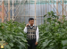 Cerita Petani Muda Paprika