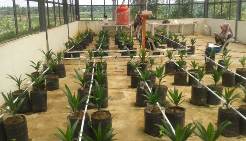 inovasi pertanian oleh mahasiswa UGM