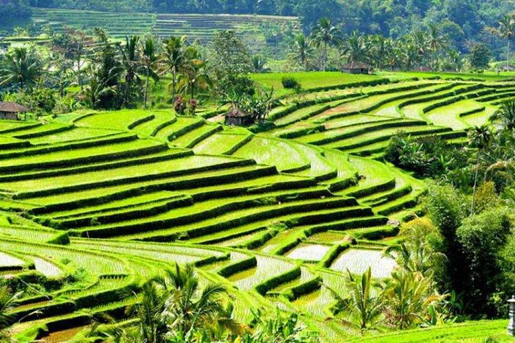 pertanian terpadu