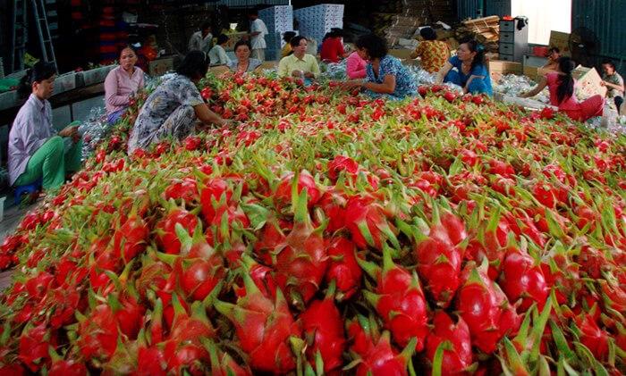ekspor hasil pertanian ke luar negeri