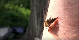 Saat Lebah Menyengat