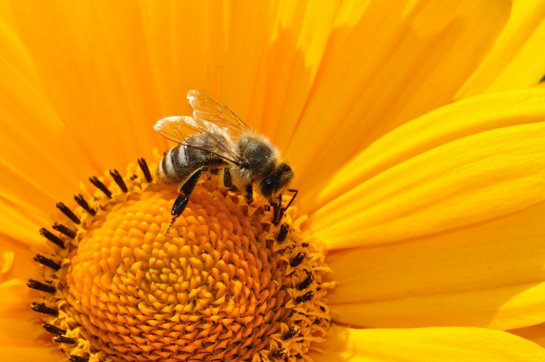Lebah, Sang Polinator Tanaman