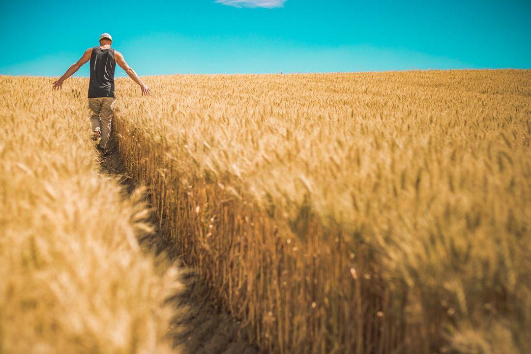 Menjadi Seorang Petani Bisa Hidup Sehat