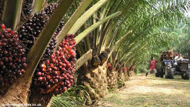 Industri Sawit di Indonesia