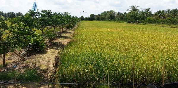 Sistem Surjan, Sistem Penanaman Lokal di Indonesia