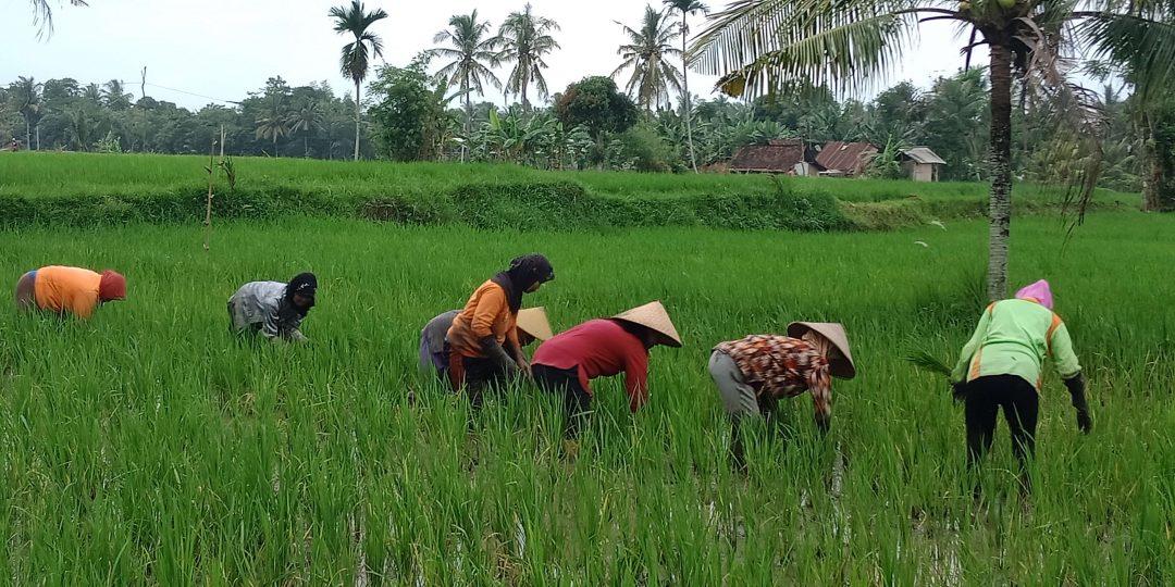 Fakta dan Tantangan Pertanian di Indonesia