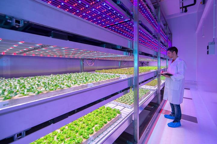 Indoor Farming bisa dilakukan di gedung yang tinggi