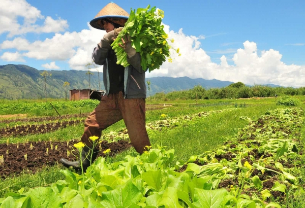 Pandangan Masyarakat Terhadap Petani