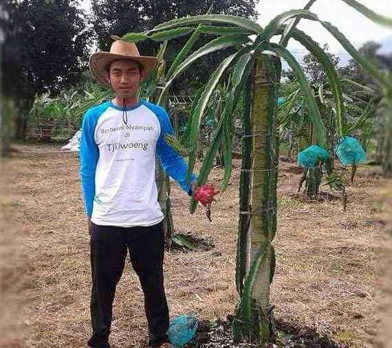 Sutarjo, Petani Muda Buah Naga
