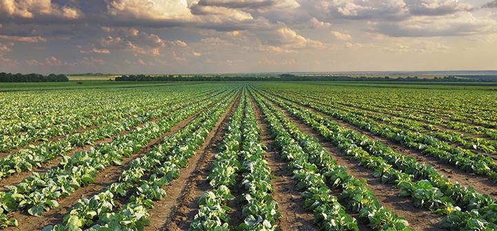 Tantangan Global Pertanian Abad Ini