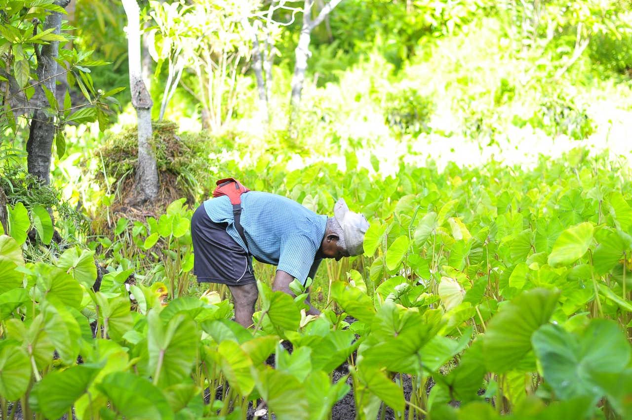 Petani sebagai SDM yang penting dalam memproduksi pangan