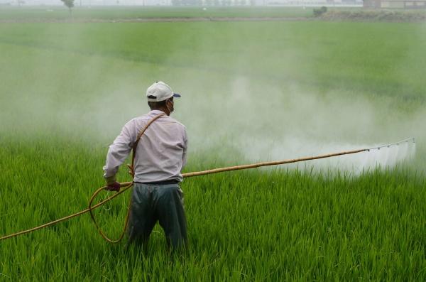 Petani yang menggunakan pestisida di sawah