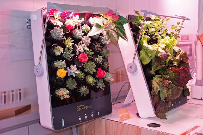 Potensi Pengembangan Bunga Potong