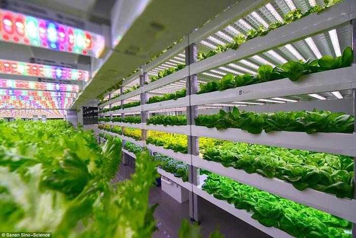 Sistem Smart Farm