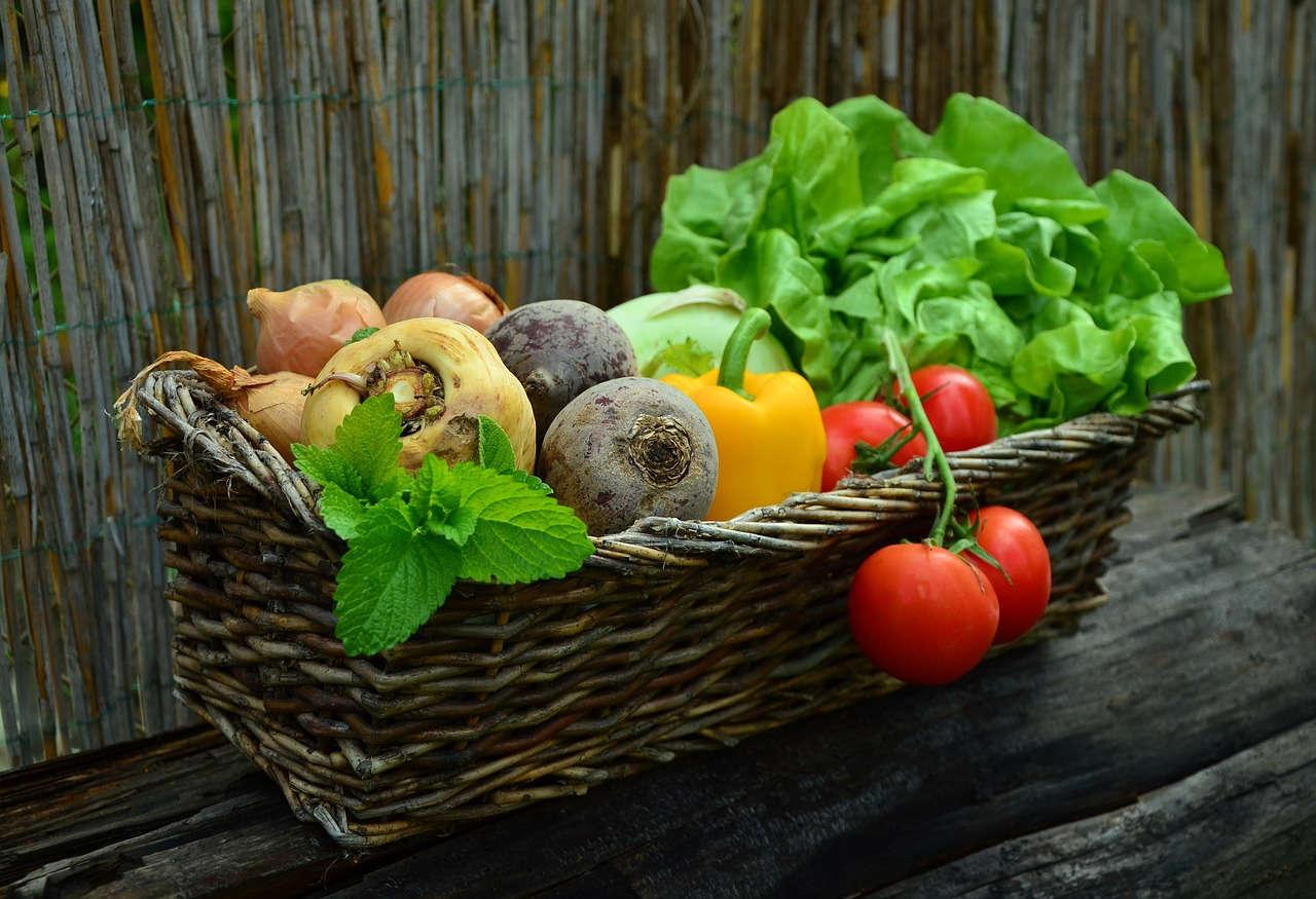 Budidaya sayur dan obat bisa dengan sistem Good Agriculture Practices (GAP)