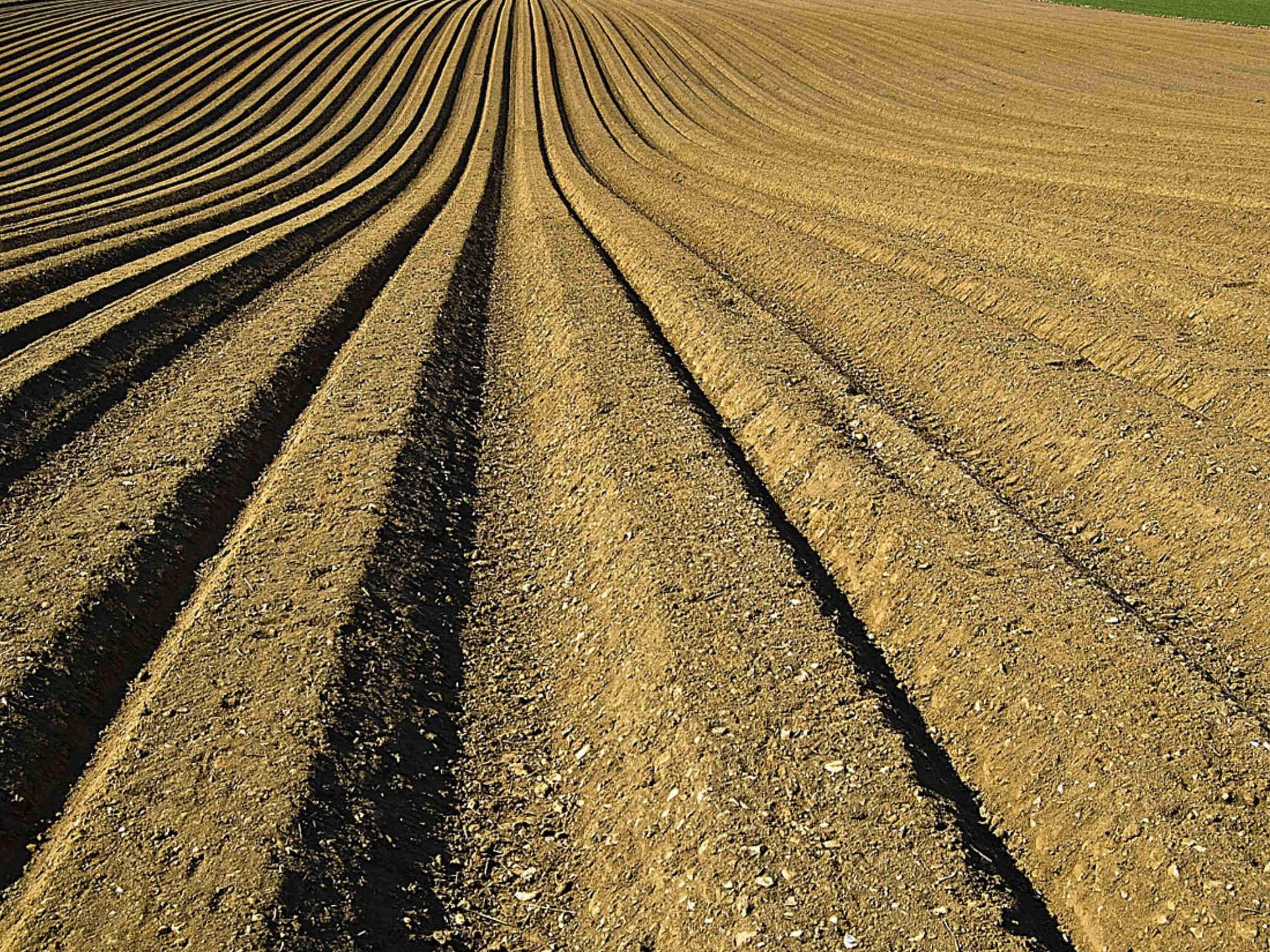 Cara Mempertahankan Kesuburan Tanah yang Efektif