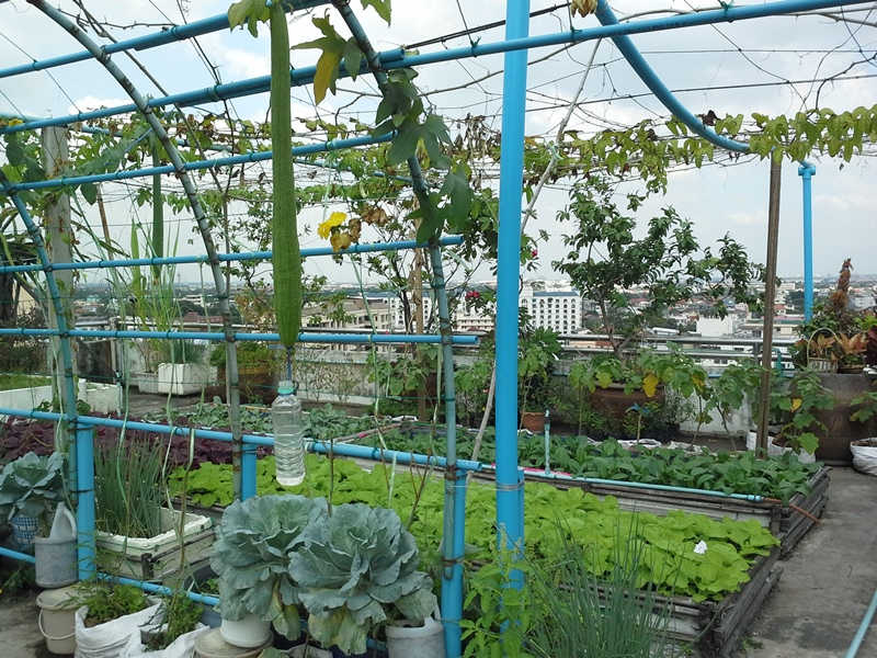 Bertanam di rooftop