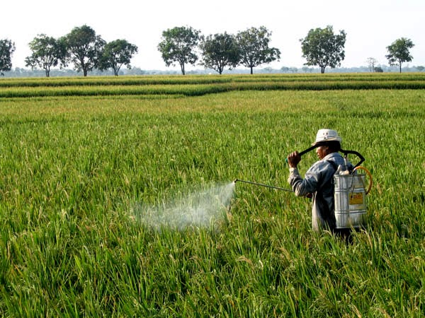 Petani Menggunakan Biopestisida untuk Membasmi Hama
