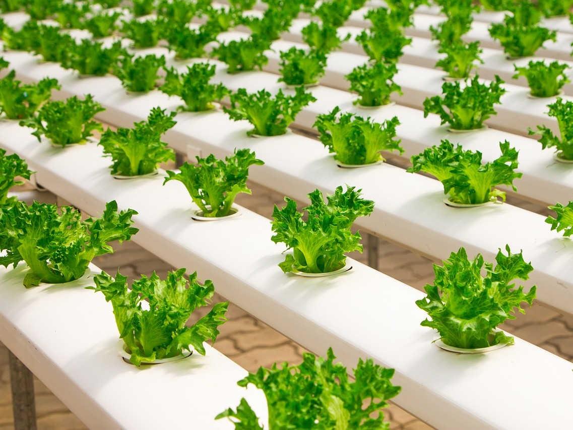 Teknik Bertanam di Lahan Sempit