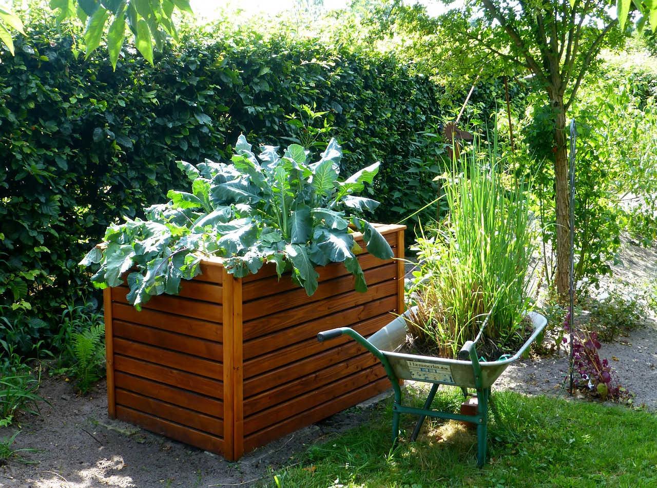 Menanam Sayur di Rumah dengan Urban Gardening
