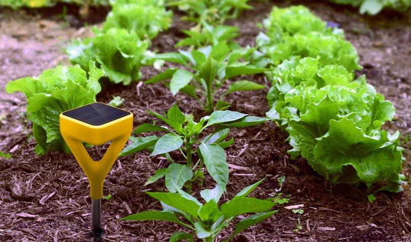 Sensor Cerdas dalam Dunia Pertanian