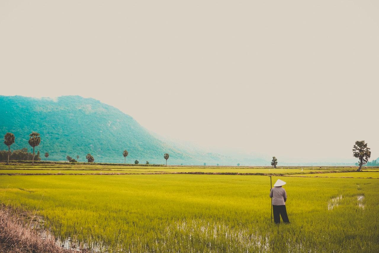 3 Alasan Petani Harus Bergabung dengan Koperasi Pertanian