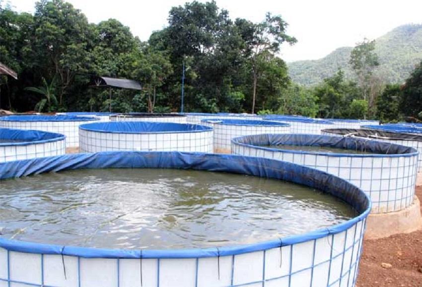 Cara Beternak Ikan Lele Dengan Sistem Bioflok Pak Tani Digital