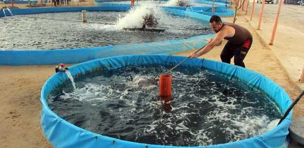 Membersihkan Kolam Terpal