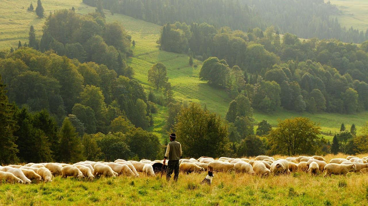 Peluang Usaha Ternak yang Wajib Kamu Tahu