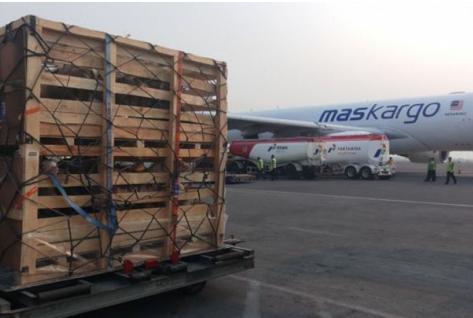 Packing Ekspor Kambing ke Malaysia