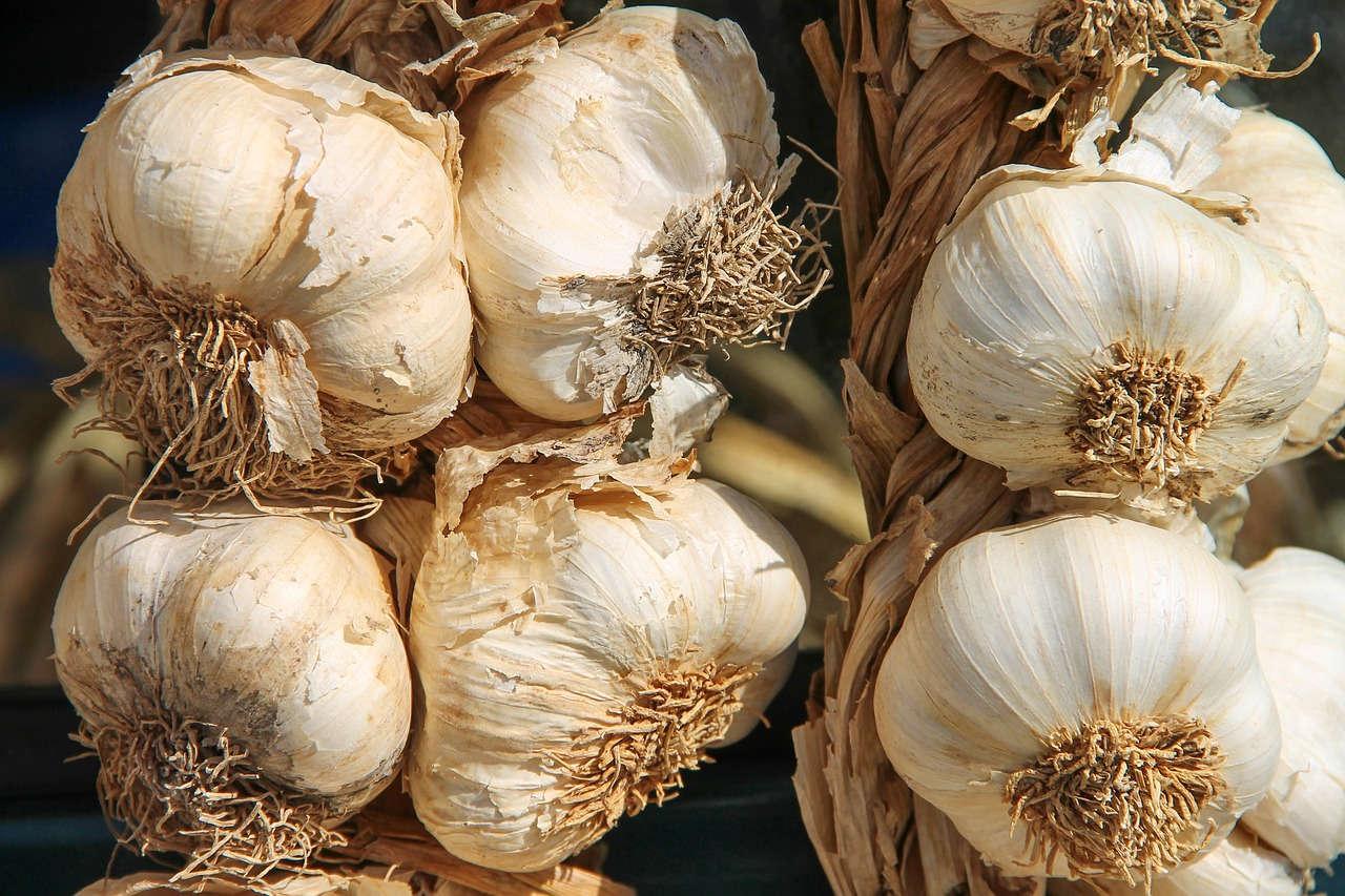 5 Hama yang Menyerang Bawang Putih dan Cara Mengendalikannya