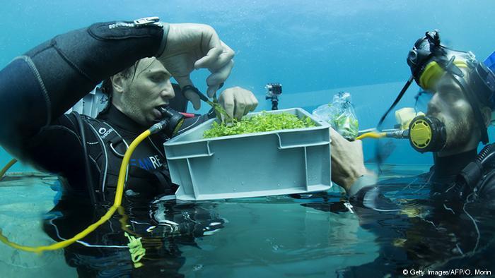 Berkebun di Dasar Laut