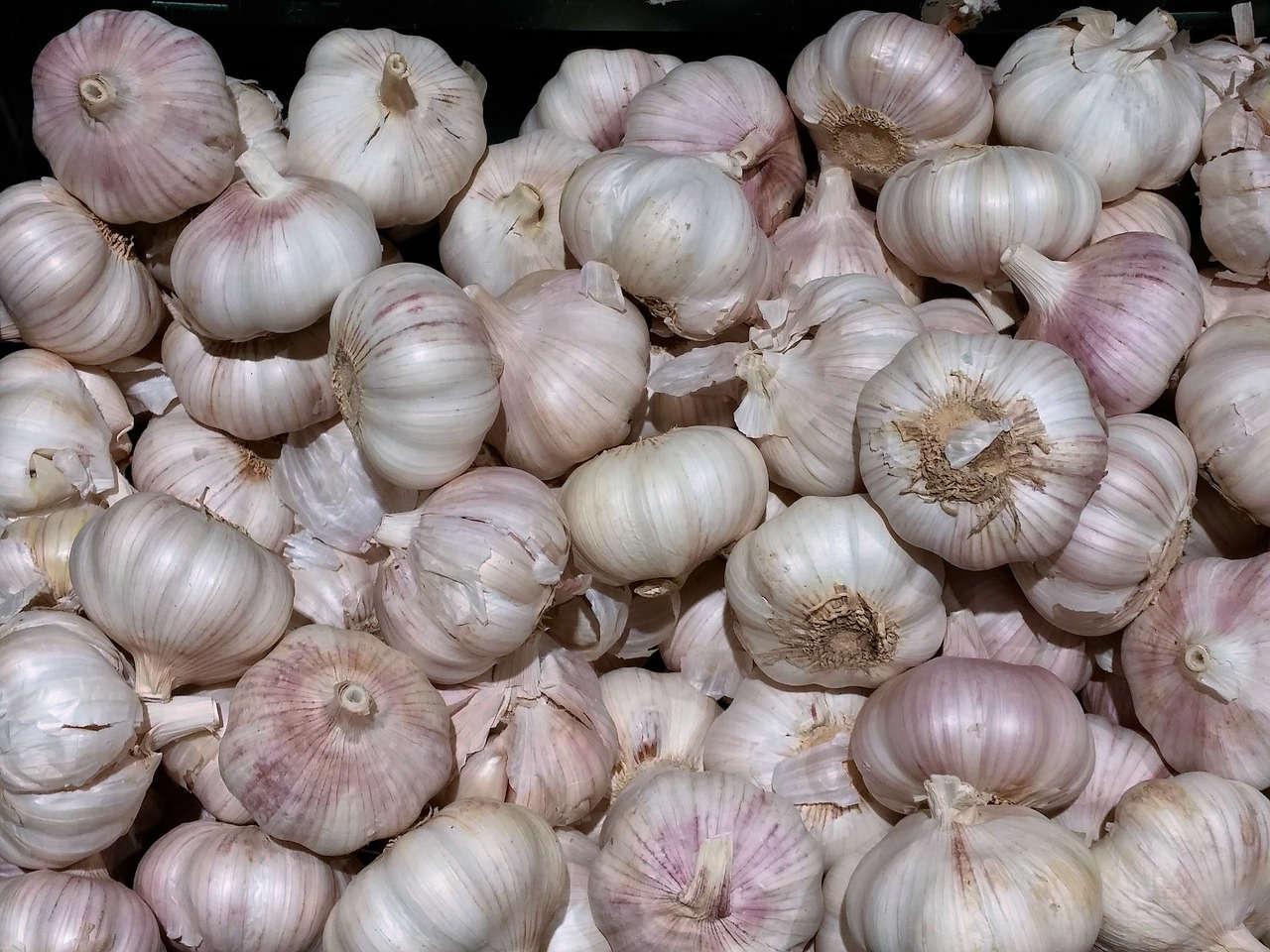 Cara Mengendalikan Penyakit pada Bawang Putih dengan Mudah