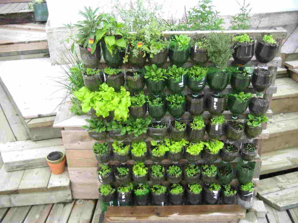 Cara Mudah Membuat Kebun Vertikal di Rumah