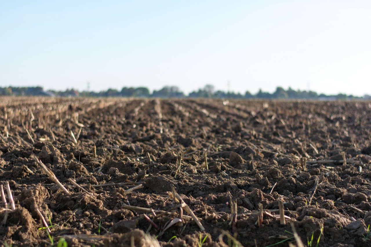 Kondisi Tanah untuk Kelapa Sawit