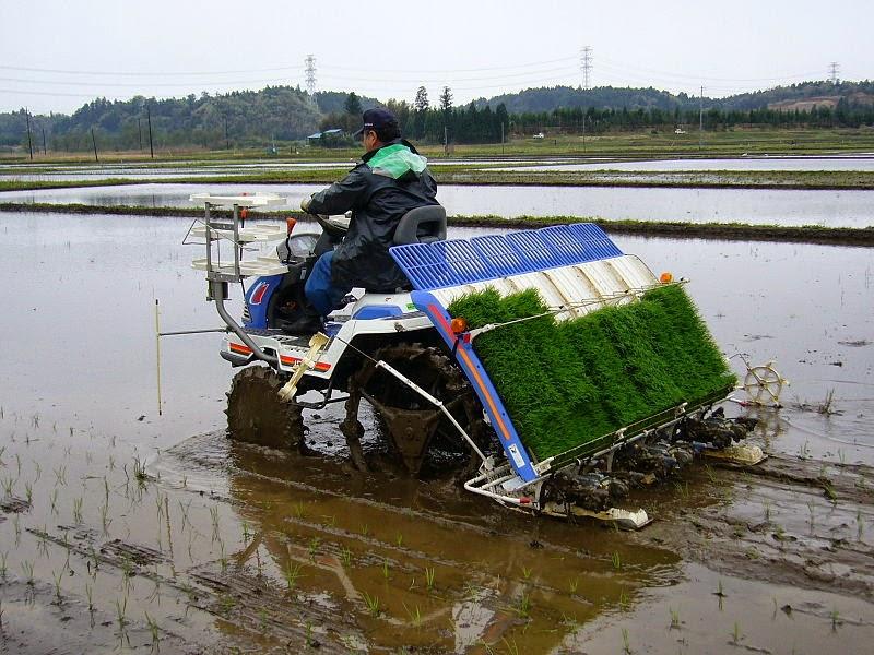 Traktor Tanam Padi