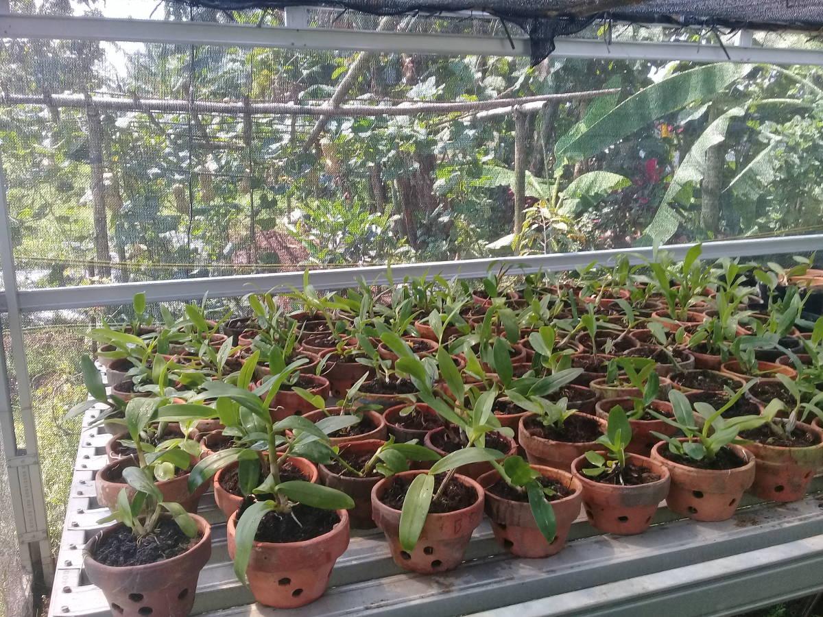 Kebun Anggrek Santri Pesantren An-Najah