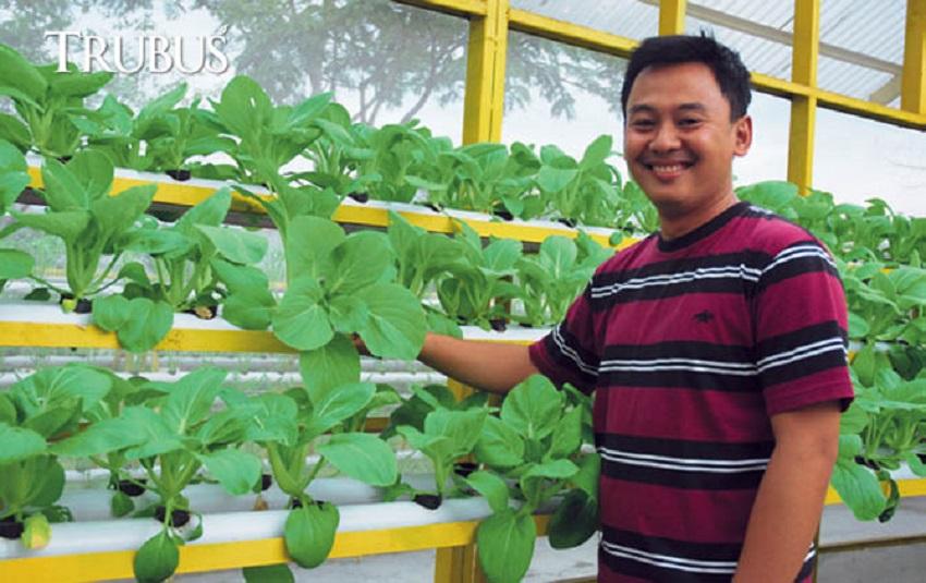 Roni Hartanto, Petani Sayuran Hidroponik dengan Omzet 240 Jutabulan