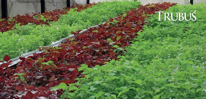 Sayuran Hidroponik Roni Hartanto