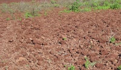 Tanah Alluvial